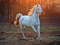 Assurance chevaux